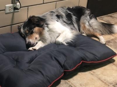 https://www.dogdenchicago.com/wp-content/uploads/2018/04/IMG_0300-400x300.jpg