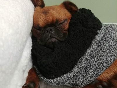 https://www.dogdenchicago.com/wp-content/uploads/2018/04/sleeper-400x300.jpg