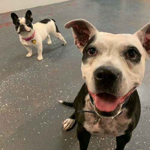 https://www.dogdenchicago.com/wp-content/uploads/2019/09/happy-dogs-500x500.jpg